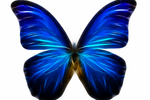 http://temp_thoughts_resize.s3.amazonaws.com/b4/318890fd9f11e48d597db9fdebb33d/fracted_sapphire_butterfly_by_byrek-d4psu5x.png
